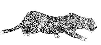 geschmeidig wie ein Leopard