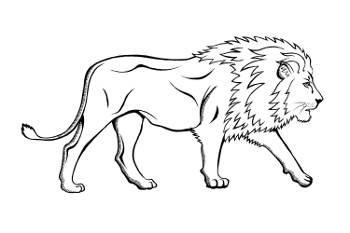 Top Five Löwe Zeichnung Fullservicecircus